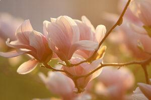 весна крокує, культура мови